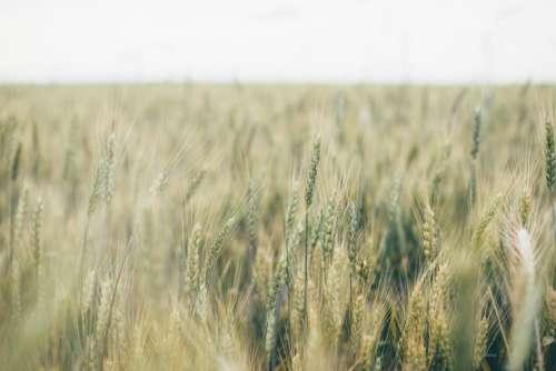 nature grasslands plains grass wild