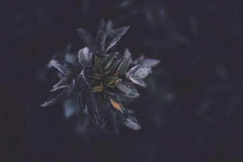 flower nature leaves violet dark