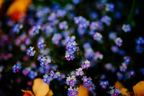 purple flower bloom blossom outdoor