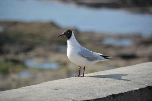 bird nature animal gull shadow