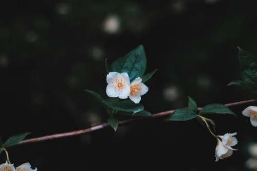 white flower green leaves nature