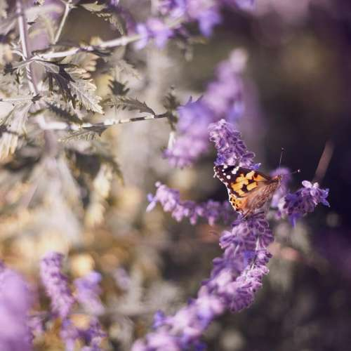 butterfly insect nature purple flower