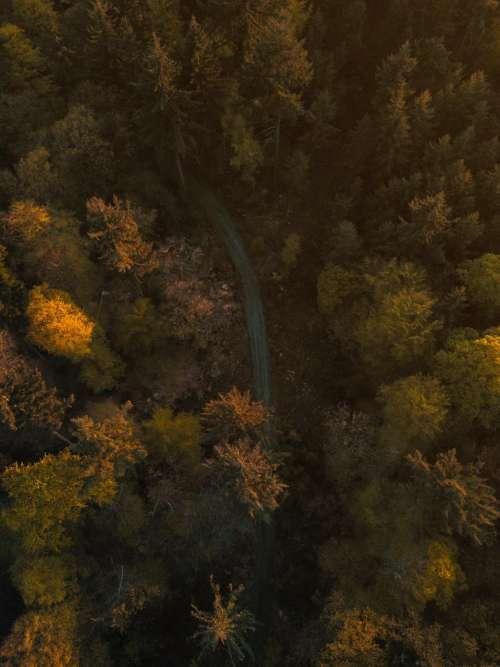 trees plant nature autumn fall