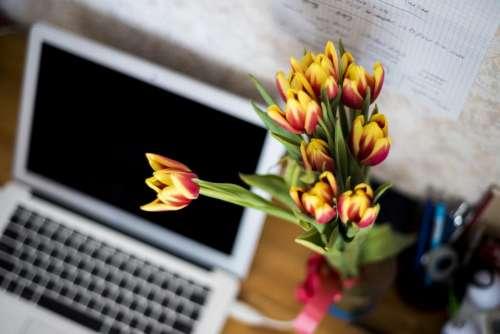 plant decor desk office business