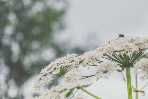 flowers petals nature blur bokeh