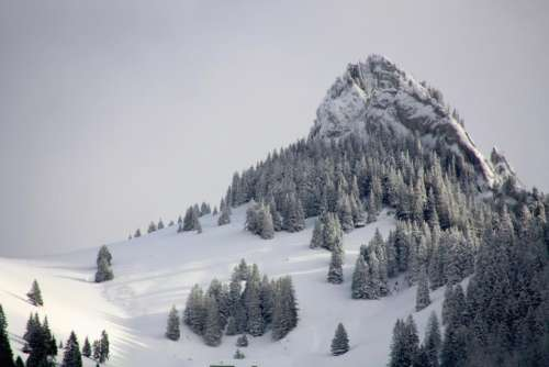 nature alps mountains snow trees