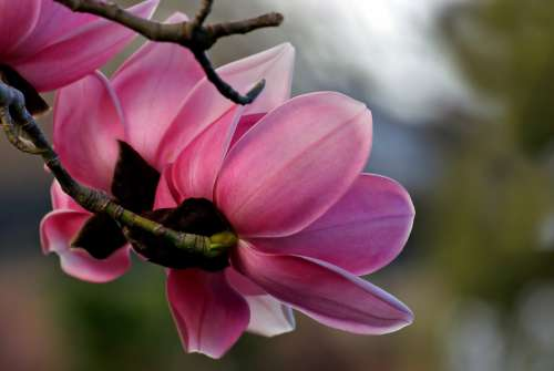 pink flower close up plants nature