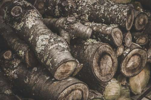 log trunk wood forest trees