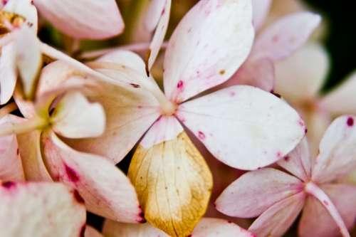 pink flowers petal nature