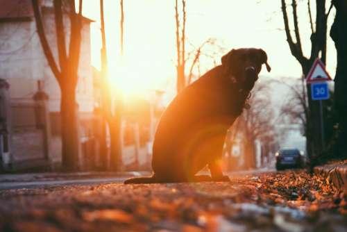 animal dog pet friend car