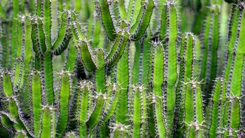 nature plants cactus cacti thorns