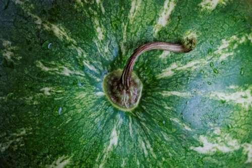 watermelon fruits food
