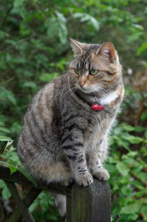 cat pet outdoors nature feline