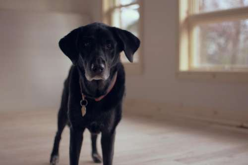 black puppy dog pet house