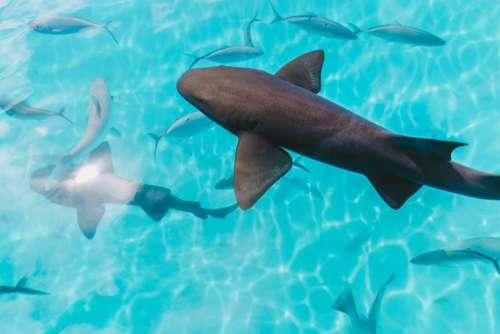 water ocean fish underwater blue