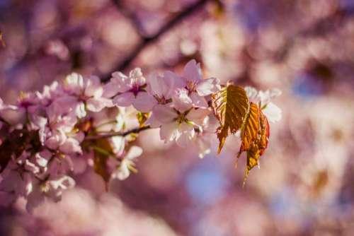 flower bloom blossom petals leaf