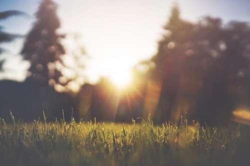 sunshine sunrays grass field outdoors