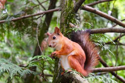 tree plant nature forest squirrel