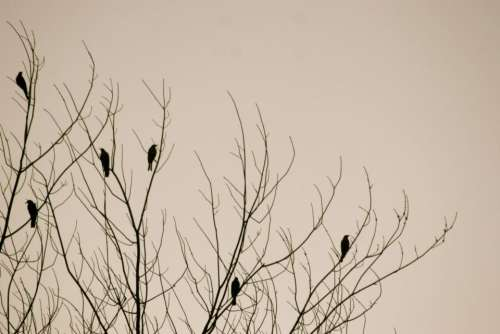 birds tree nature background winter
