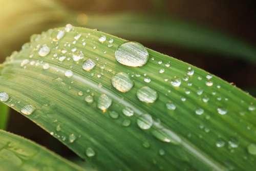 green leaf wet water raindrops