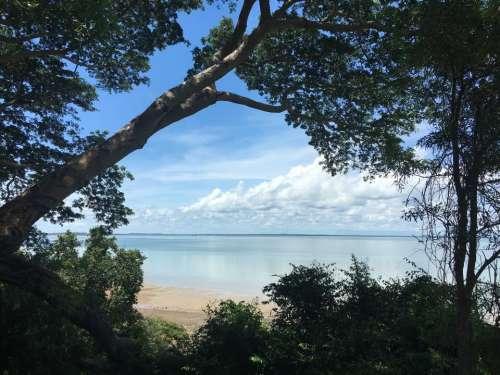 island trees beach water sea
