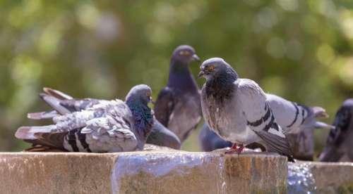 dove pigeon bird animal blur