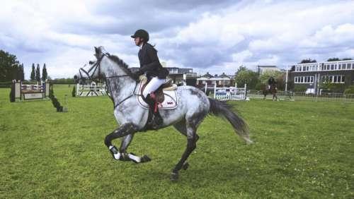 lawn green grass field horse