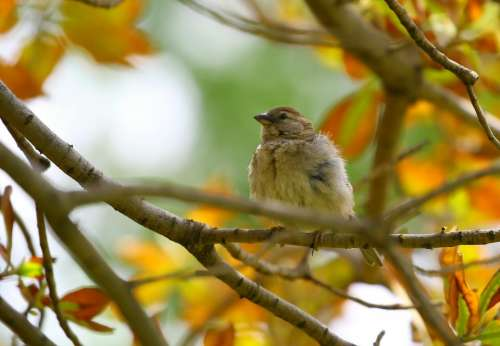 bird animal fall autumn nature