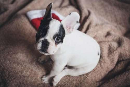 dog puppy pet animals christmas