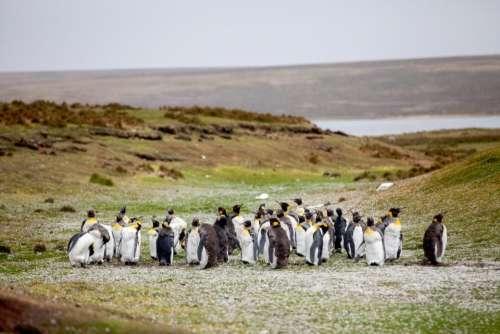 nature grass animals birds penguins