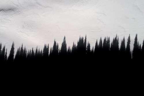 pine trees plants outdoor silhouette snow