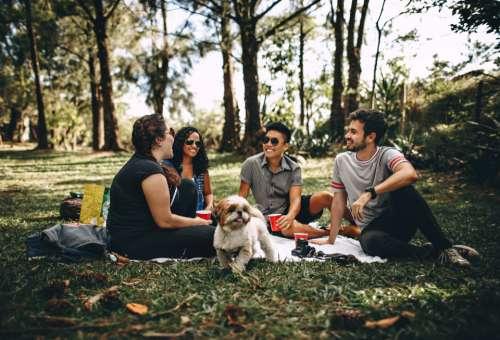 friends picnic park dog animal