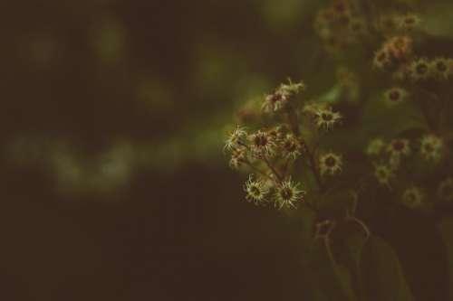 dark blur bokeh flower plants