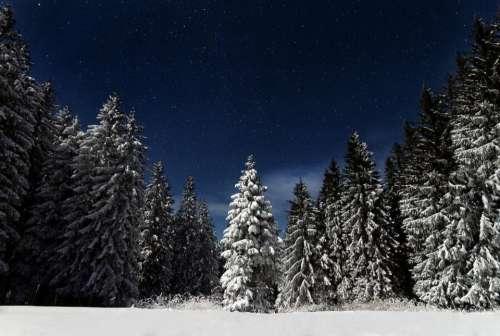 nature landscape woods forest snow