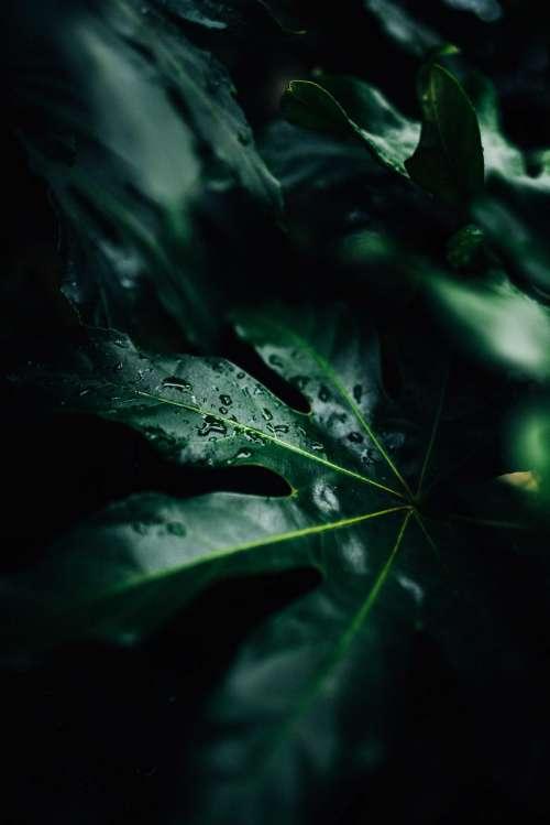 dark green leaf plant nature