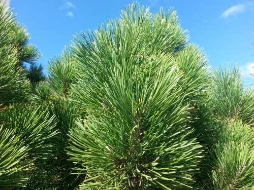 green plants sky