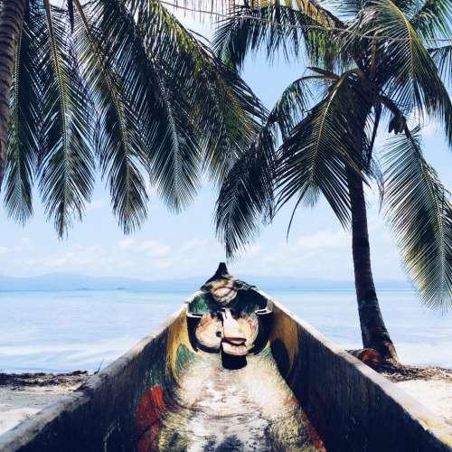 palm trees tropical island beach sand