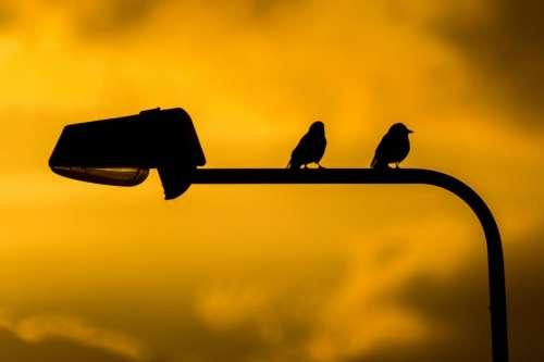 birds lamp post silhouette sunset dusk