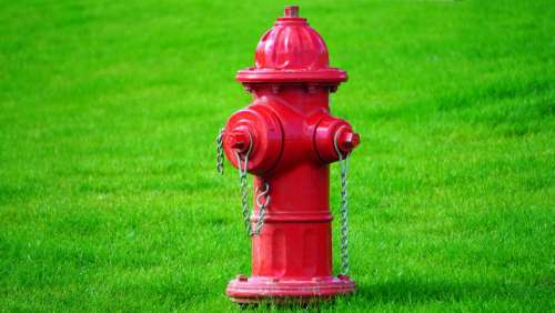 nature green red fire hydrant