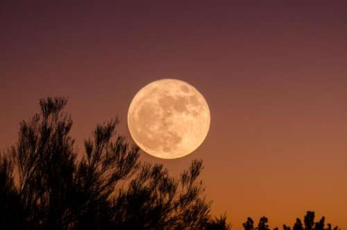 sky tree plant silhouette moon