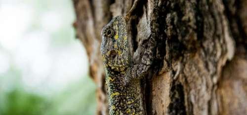 animals reptiles lizard gecko scales