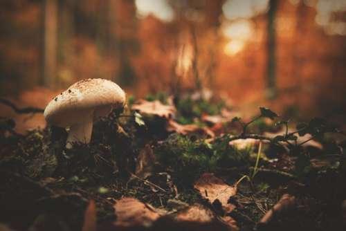 leaf fall outdoor mushroom fungus