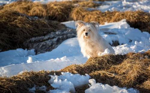 dog puppy animal pet outdoor
