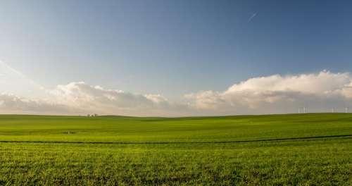 green grass field farm agriculture