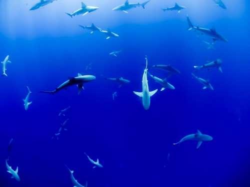 underwater blue ocean sea fish