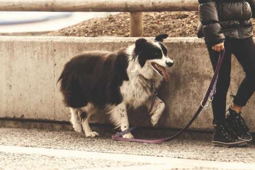 dog animal pet leash people