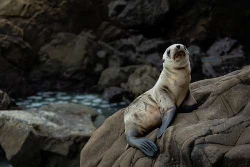 nature water rocks animals seal