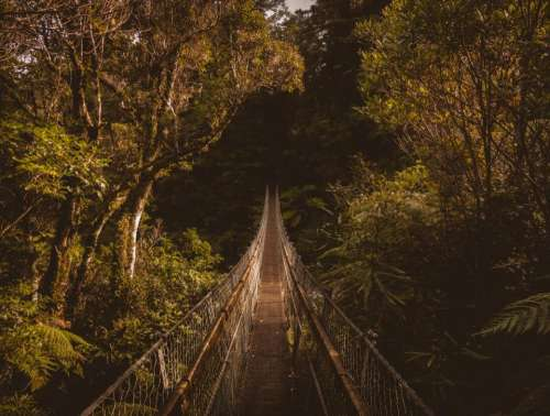 hanging bridge outdoor travel green