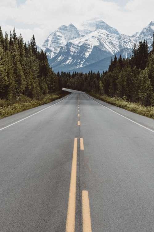 nature road travel adventure trees