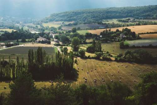 green grass plant trees field